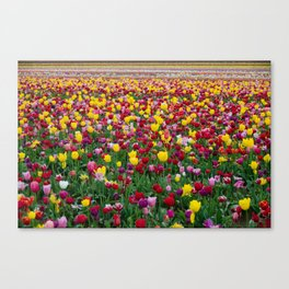 Fields of Color II, Woodburn Tulip Festival Canvas Print