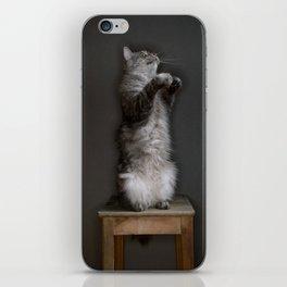 Cat standing iPhone Skin