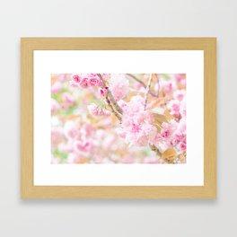 double cherry blossoms in japanese garden Framed Art Print