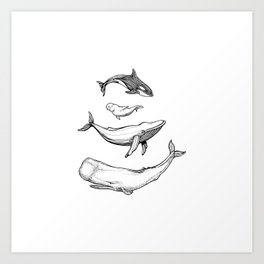 Whales are friends Art Print
