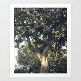 Carob tree Art Print
