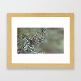 Cedar Berry Framed Art Print