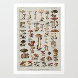 Vintage French Mushroom Identification Chart Art Print