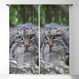 Wild Cat Blackout Curtain