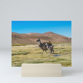 Mother and Baby Llama in Bolivia Mini Art Print