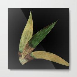 Three Eucalyptus Leaves: A Minimalist Perspective Metal Print