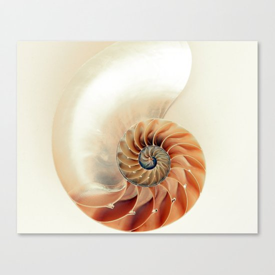 Shell of life Canvas Print