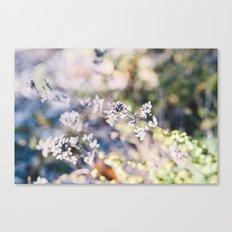 Botanical no. 1 Canvas Print