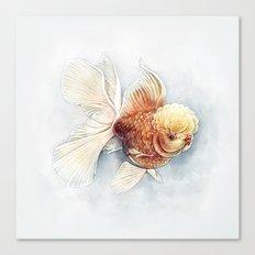 Oranda Goldfish Canvas Print