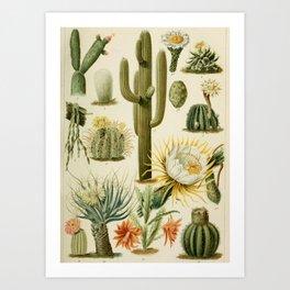 Naturalist Cacti Art Print