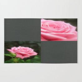 Pink Roses in Anzures 3 Blank Q6F0 Rug