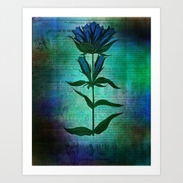 Botanicals/Flower Art Print