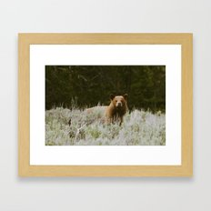 Bush Bear Framed Art Print