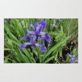 Wild Purple Iris Rug