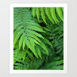 green ferns Art Print