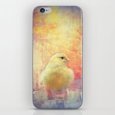 Birdie iPhone & iPod Skin