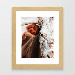 Cow Closeup Framed Art Print