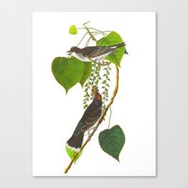 Tyrant Fly-catcher Bird Canvas Print