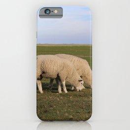 Grasende Schafe auf Nordseeinsel Pellworm / Grazing Sheep on green Field iPhone Case