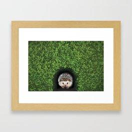 Little Hedgehog in the Hedge Framed Art Print