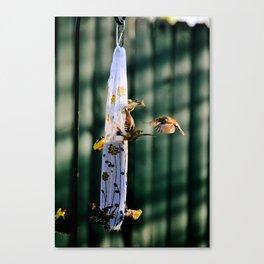 Bird drama Canvas Print