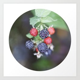 black berry Art Print