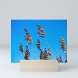 Reeds in golden light Mini Art Print