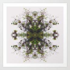 Epiphyte Kaleidoscope Art Print