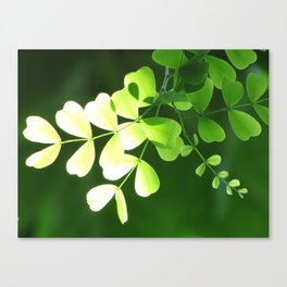Green Ombre Leaves Canvas Print