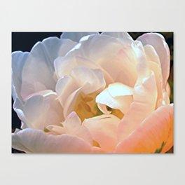 My favorite tulip -- Tulipa Angélique Canvas Print
