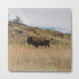 Stand Steady - Bison, Oklahoma Metal Print