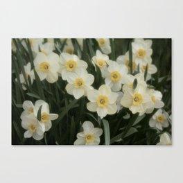 Early Spring Bloom XVI Canvas Print