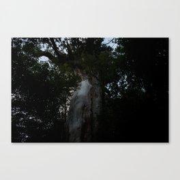 Yakusugi (Japanese Cedar) Canvas Print