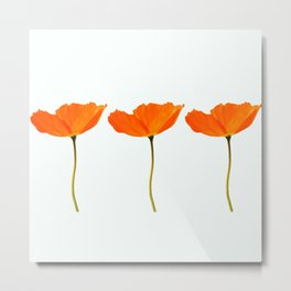 Three Orange Poppy Flowers White Background  Metal Print