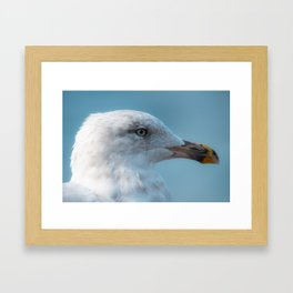 Shorebird in close-up Framed Art Print