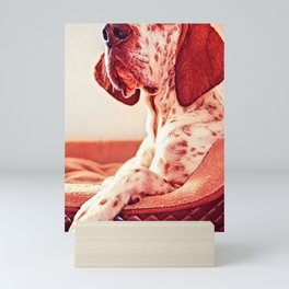 Photo Of Lovely Dog Mini Art Print