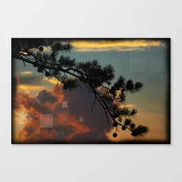 Pine Branch Canvas Print