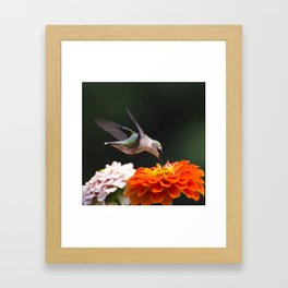 Hummingbird and Flowers Framed Art Print