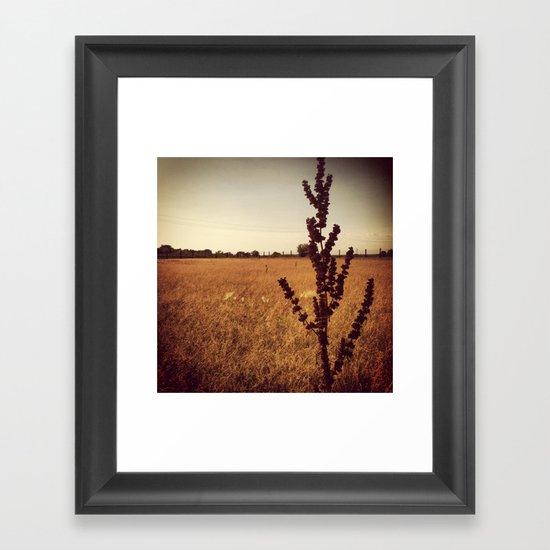 Wisconsin Prairie  Framed Art Print