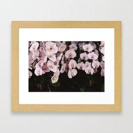 Orchids in Hong Kong Framed Art Print