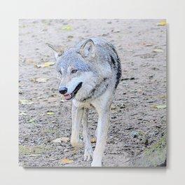 Sketchy Wolf 31801 Metal Print