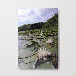 Lilypond II Metal Print