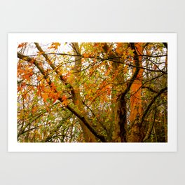 autumn yellow and orange Art Print