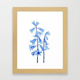 botanical bluebell flowers watercolor Framed Art Print