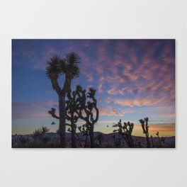 Sunset in Joshua Tree National Park Canvas Print