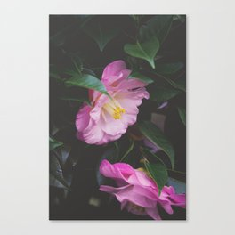 Moody Pink Camellia Canvas Print