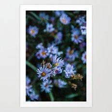 Wyoming Fall Flowers Art Print