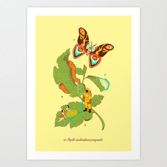 Papilio insulaeinfanum praegrandis Art Print