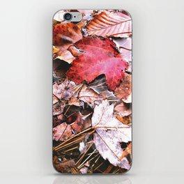 Brisk Autumn  iPhone Skin