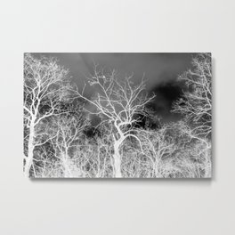 Naked trees forest, negative black and white photo Metal Print